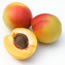 アプリコットカーネルオイル(杏仁油)の写真